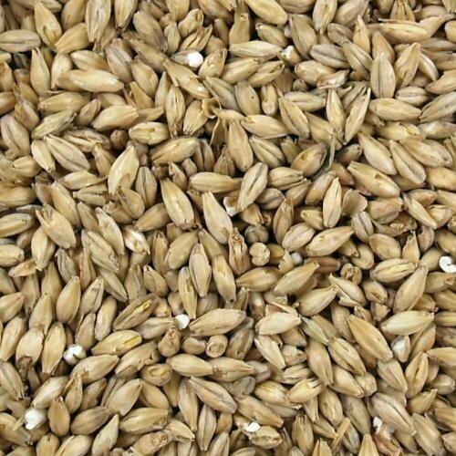 Brewers Malt Grain 1kg - Breiss